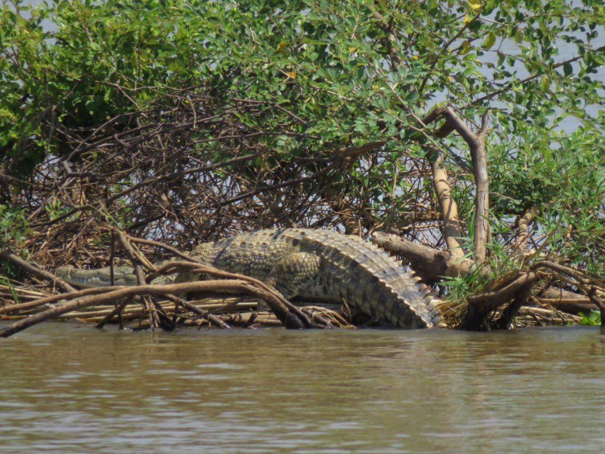 این یکی هم سر و دمش را از رودخانه آورده بیرون و وا می خورد، نزدیکش که می شویم در آب محو می شود، انگار که نبوده است!