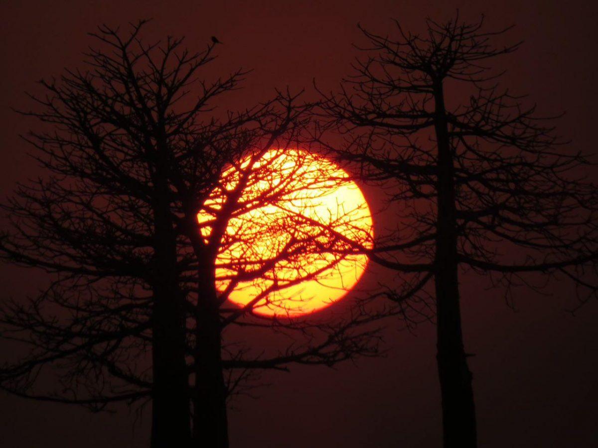 می پایم لحظه های افولش را، باحوصله پایین می آید، انگار ناز دارد این جوشان چشمه هستی، به جان می خرم نازش را آنگاه که با شاخه سار درختان در هم می آمیزد و خطوطی ناخواندنی از رموز هستی را نشانم می دهد.
