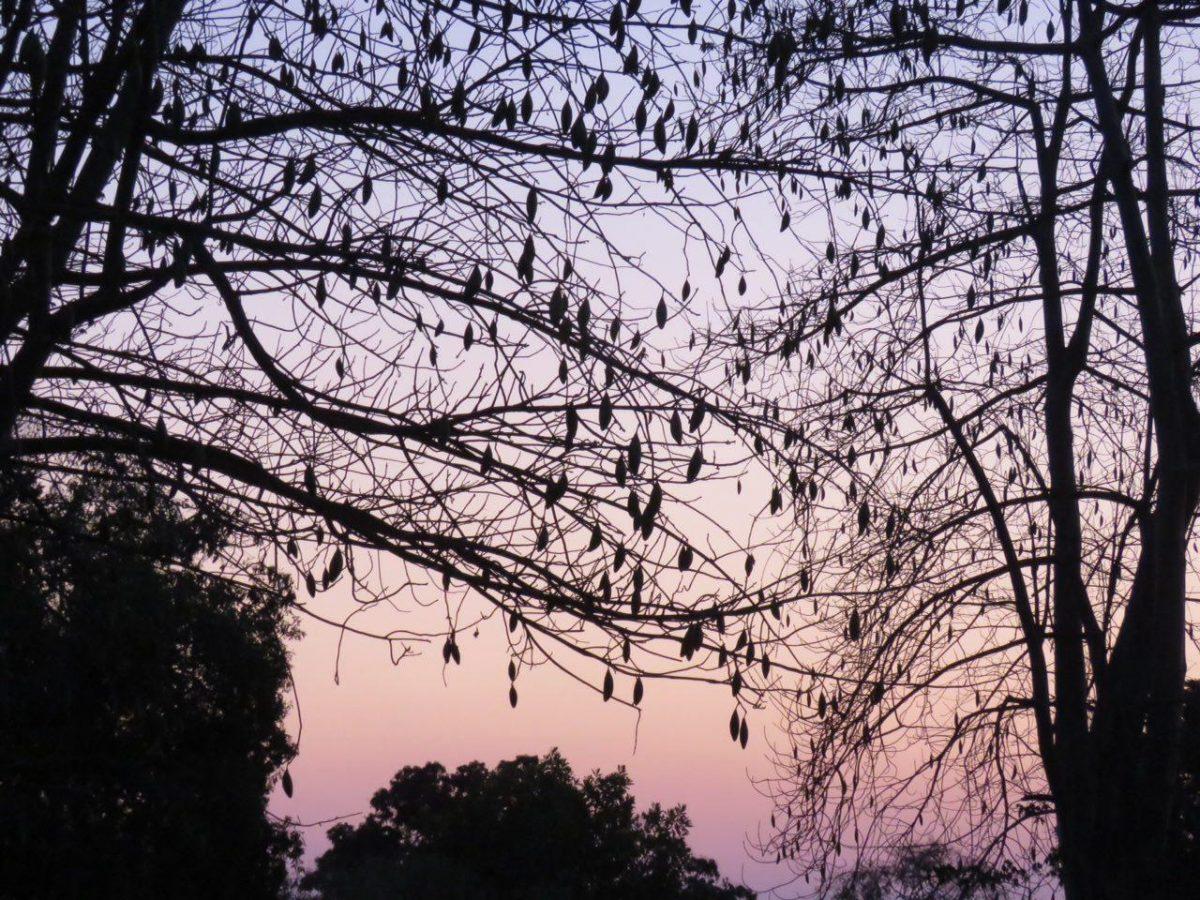 صبح دیگر روزی از سفر اما اینگونه آغاز می شود، رنگ هایی که آرام در هم می تنند و تاریکی شب که در دهان صبح بی نفس می گردد و چرخ زندگی روزانه در ماداگاسکار به چرخش درمی آید.