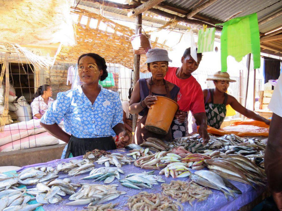 ماهی و میگو و محصولات دریایی هم که طبیعتا محصول اصلی عرضه شده در شهر بندری مورونداواست، صید صبح اند و تازه، خبری از یخ و یخچال نیست...