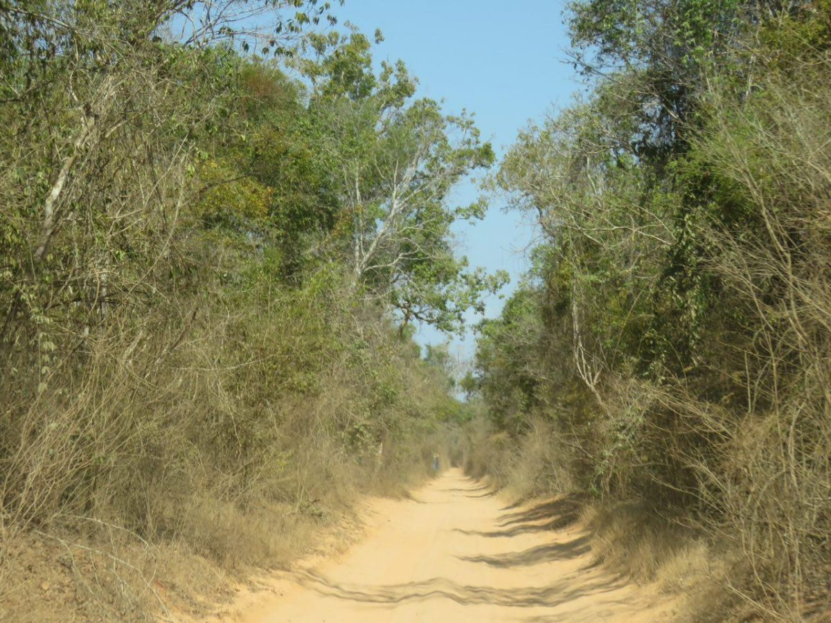 و راهی که چون دالانی بی انتها در میان درختان و بوته های درهم تنیده این سرزمین باز شده است تا محلی باشد برای گذر، گذرگاهی برای دیدن و دیدار.