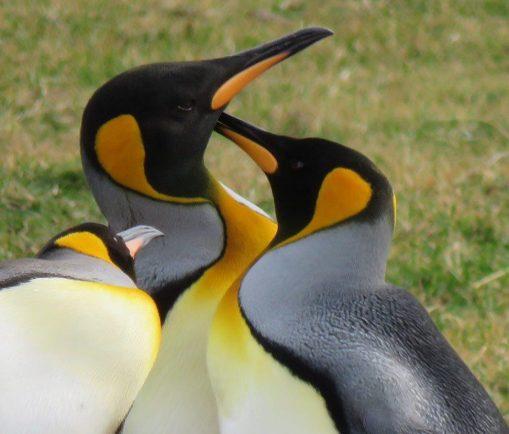 پنگوئن (۲)