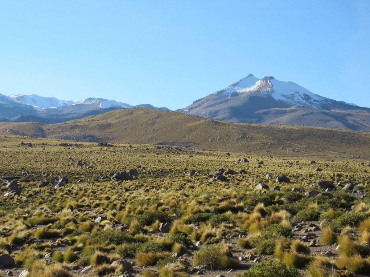 """صبح بالا می آید و زمین آرام می گیرد، آفتاب می خورم و گرم می شوم، حالا قله آتشفشانی """"ال تاتیو"""" هم در مرز بولیوی و شیلی سر بلند کرده است و خودنمایی می کند با آن تاج سروری سفید رنگش"""