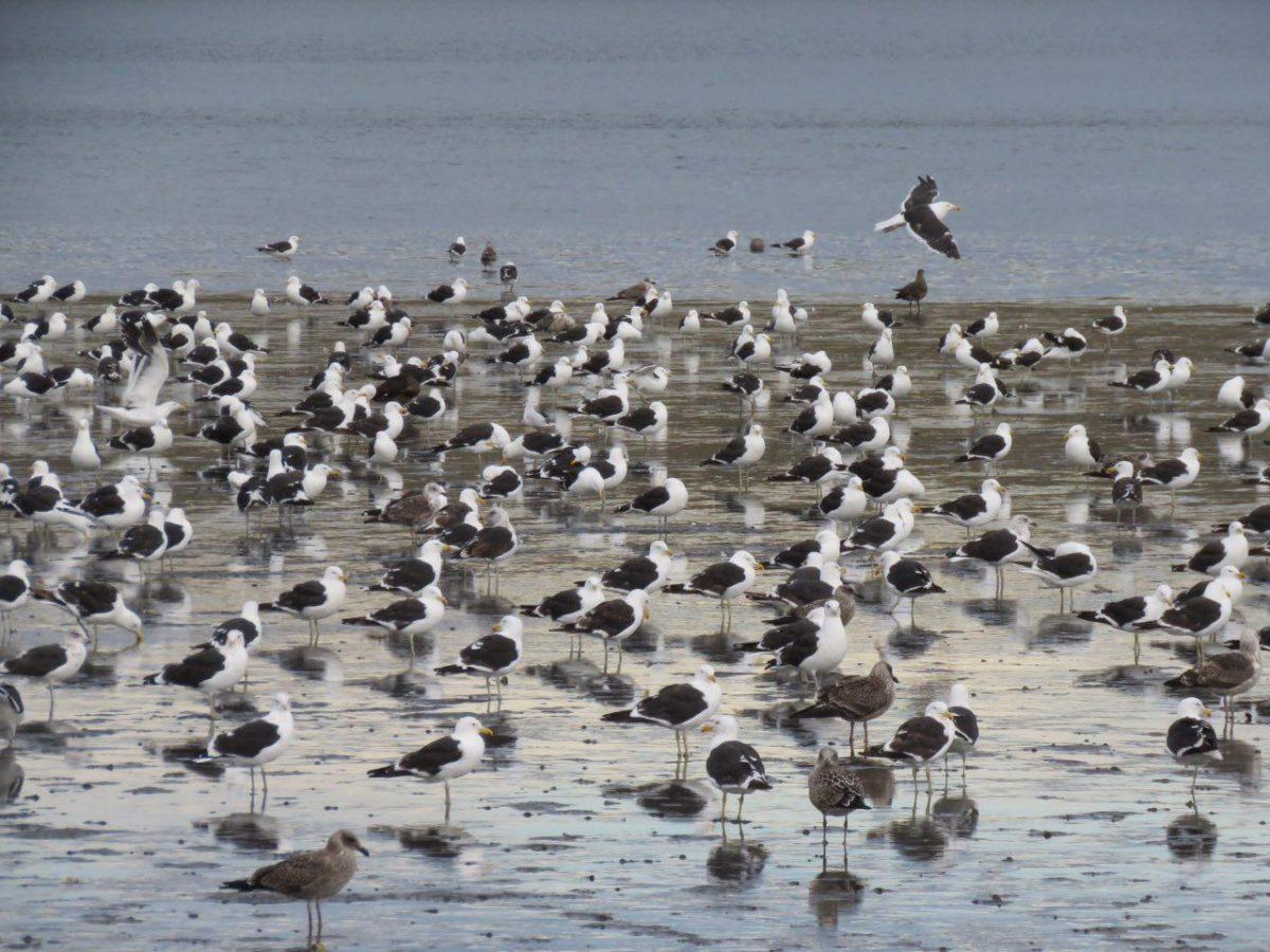 در آنسوی خلیج، کاکایی ها دنیا را گذاشته اند روی سرشان، انگار تجمع اعتراضی دارند، خودشان و سایه هاشان در آب!