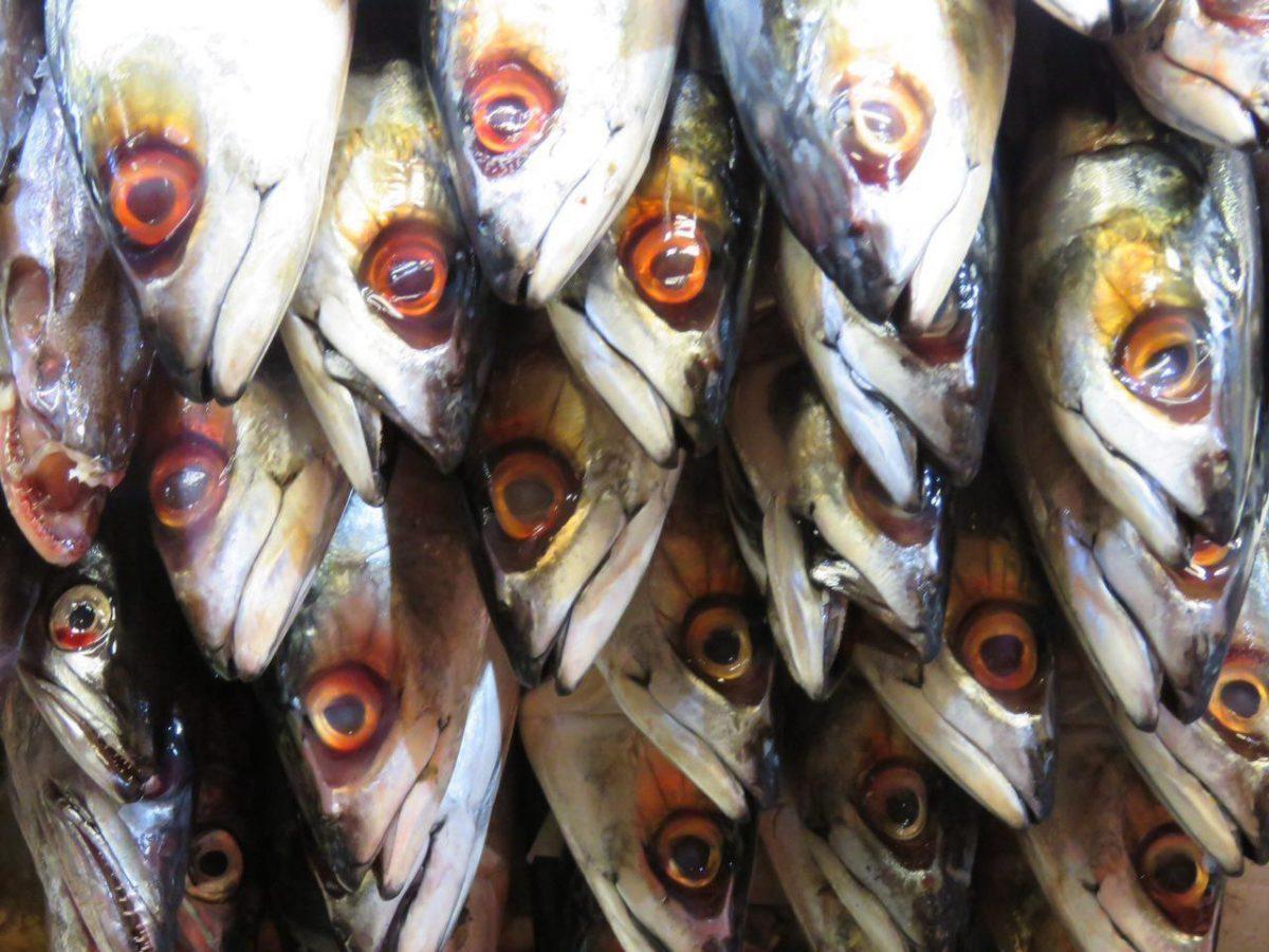 """صف شده اند در گوشه ای از بازار ماهی فروش ها، گویا """"چشم"""" به راهند تا خریدار قابلی پیش آید."""