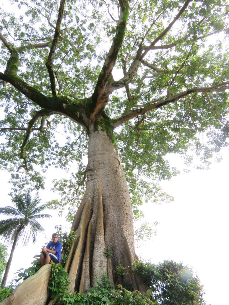 ساحل کنت اما از آن ساحل های ماسه ای سفید و زیبای سیرالئون است که در عین سادگی، به زیبایی توسط درختان استوایی تنومند و همچنین درختان نارگیل تزیین شده است...