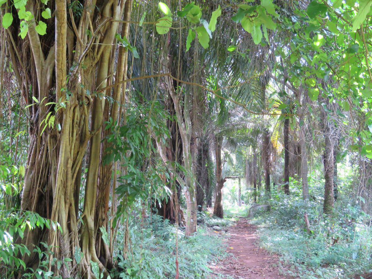 سراسر جزیره پوشیده از جنگل های بارانی انبوه است و در گوشه هایی از آن همچنان مردم محلی زندگی می کنند. قصه غم انگیزی ست وقتی می شنوم اینجا یکی از مراکز مهم نگهداری و فروش برده ها در غرب آفریقا بوده است!