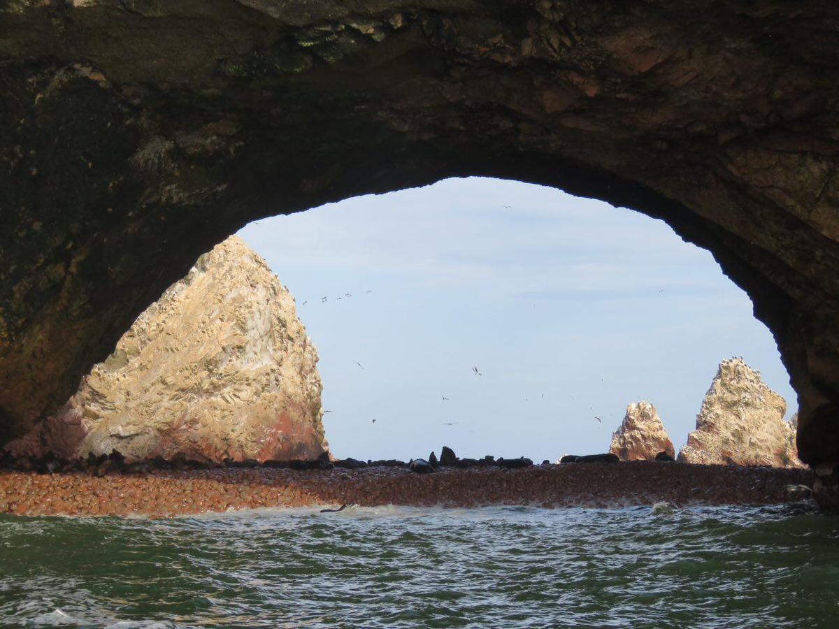 جزیره های کوچک و بزرگ در کنار هم بالا آمده اند با اشکال مختلف و همه اینها شده اند یک زیستگاه منحصر به فرد برای گونه های مختلف حیات وحش و پرندگان دریایی، زیبایند و خوش تراش