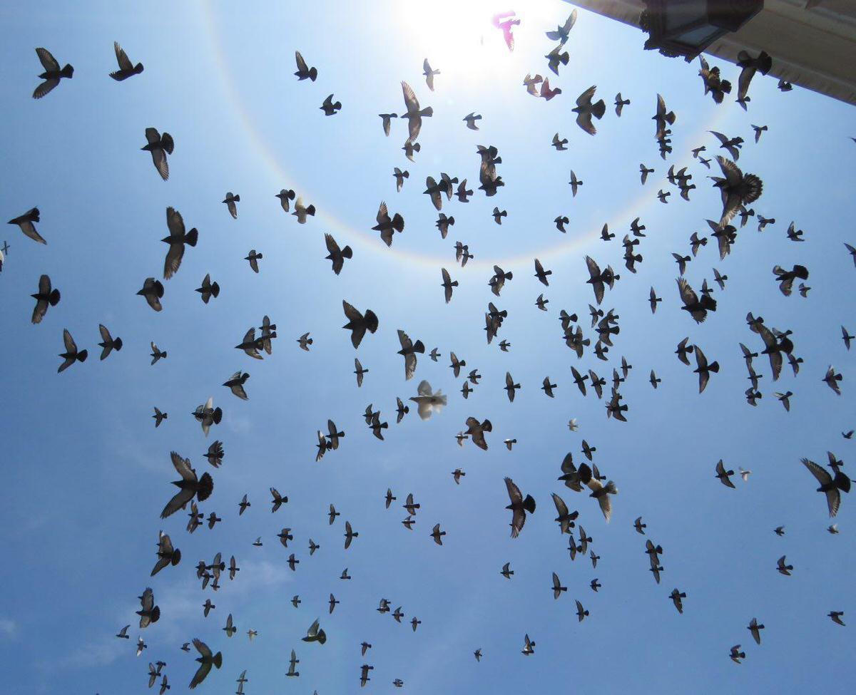 لیما و بافت قدیم پرقصه اش را می شود عاشق شد، آسمان آبی و آفتاب گرم و و کلیساهای پر از کبوترش را، همان ها که حس و حالشان پرواز هدیه می دهد.