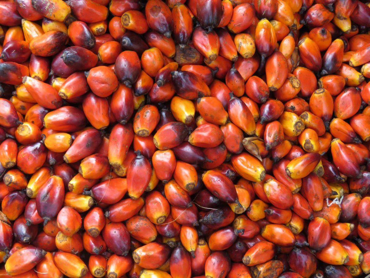 میوه های درخت پالم هستند، شبیه نخل های بزرگ، تقریبا همه جا هستند، به صورت سنتی هم از خود میوه و هم از هسته اش روغن می گیرند، روغن پالم.