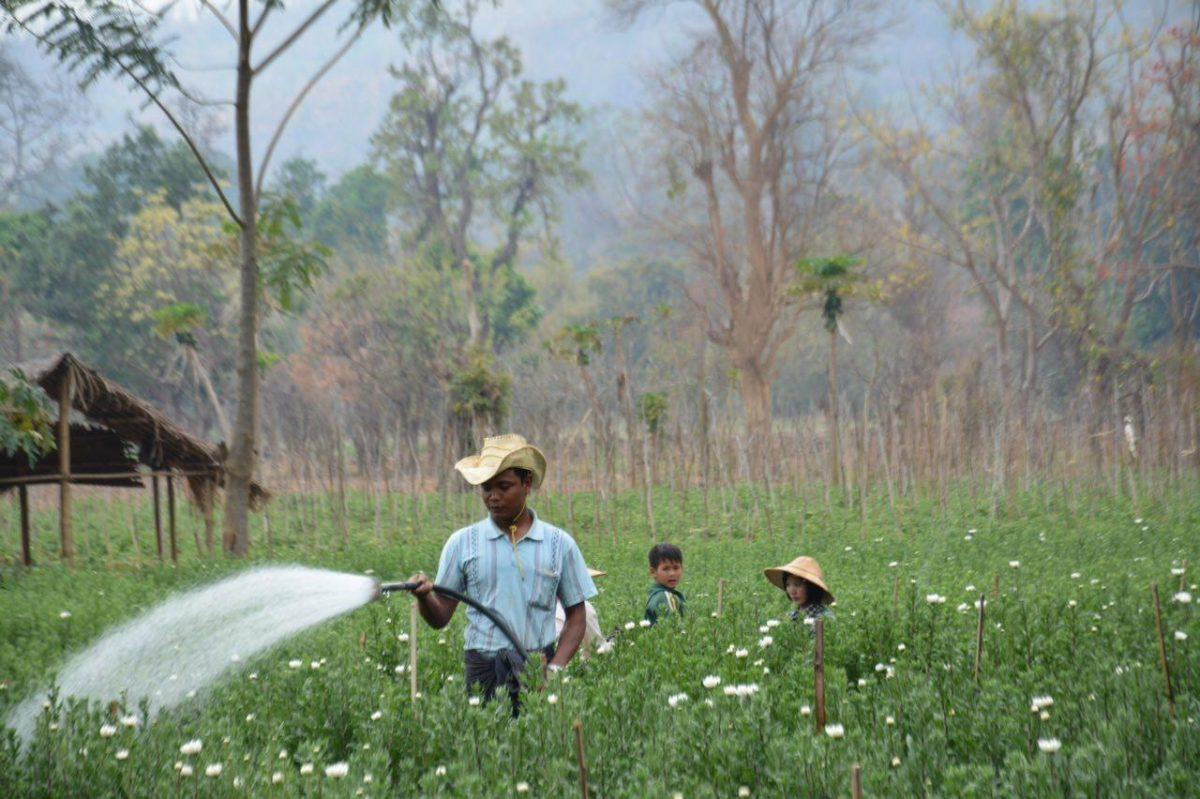 برمه ۱۴