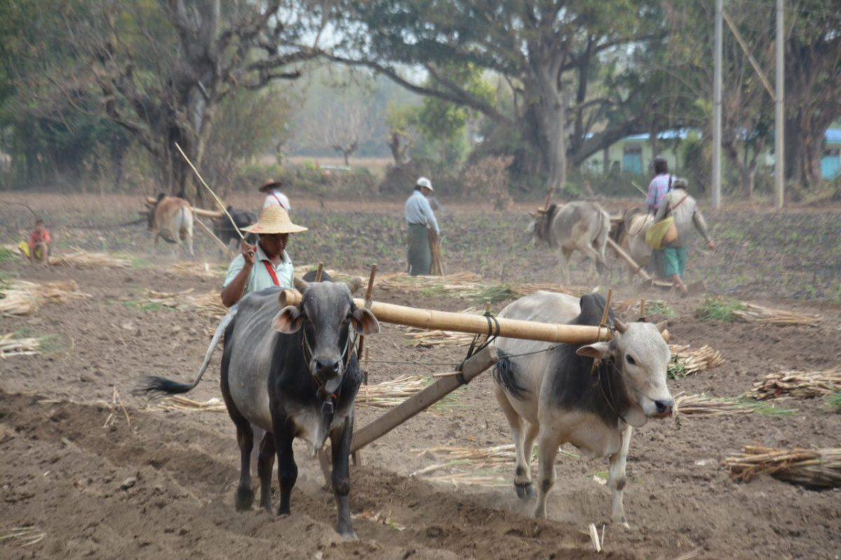 برمه ۶