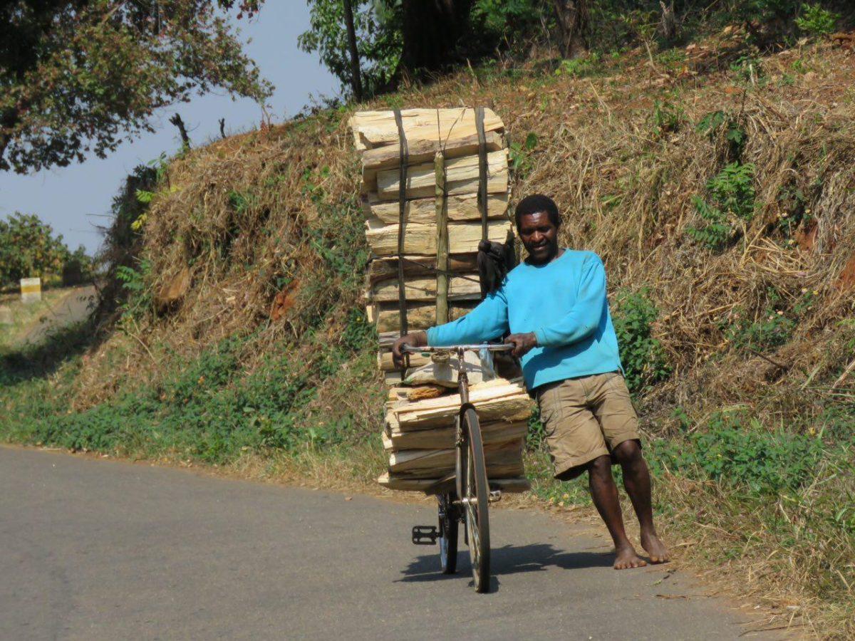 چوب ها مسافران خاموش این روزهای جاده های مالاوی هستند! آن هم در ازای کاری سخت به ثمنی بخس به فروش می رسند تا قوتی شوند برای خانواده هایشان!!