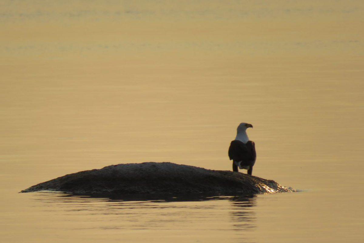 این هم یک عقاب ماهیگیر که او هم گویا آمده به تماشای غروب، شاید هم تسبیح می کند خالق غروب را...