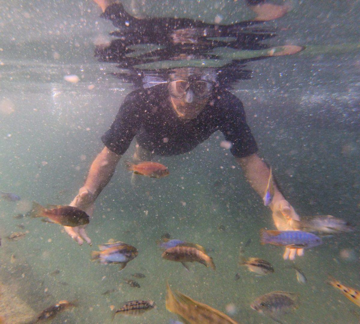 حس خوبیست عینک شنا بزنی به چشمانت و شناور دریایی از زیبایی شوی، با رنگ های بدیعش، می آیند پیش چشمانت، ماهی ها را می گویم، هر یک با طرحی و رنگی، شاید اصلا نشانه ای باشند...