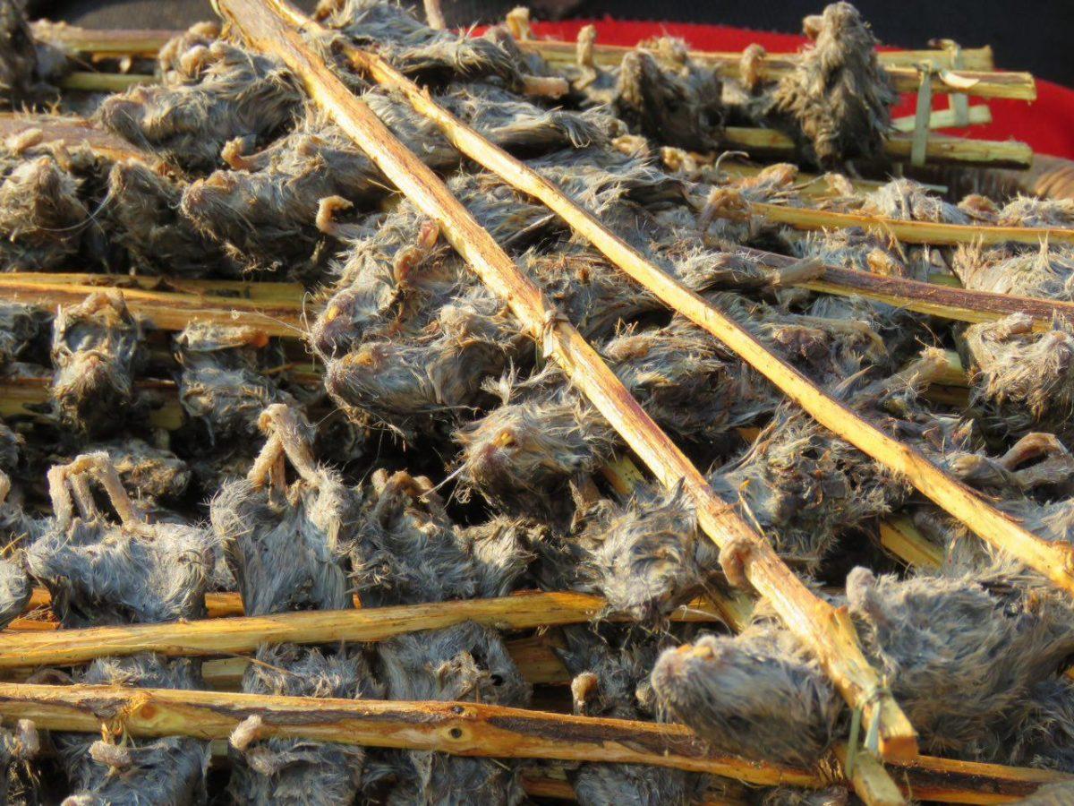 حتی اگر کالایشان این سیخ های چوبی از موش های کباب شده باشند که تازگی ها مردم به خوردنی بودنشان پی برده اند و با ولع فراوان، به دندانشان می کشند، همانگونه که قبلا مارها و میمون ها را هم خورده اند!!