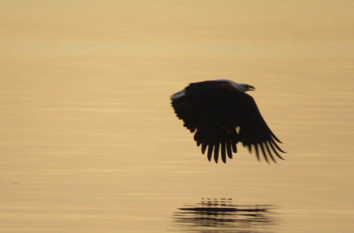 قصه روز به پایان رسیده و عقابی که هنوز به خانه اش نرسیده است!
