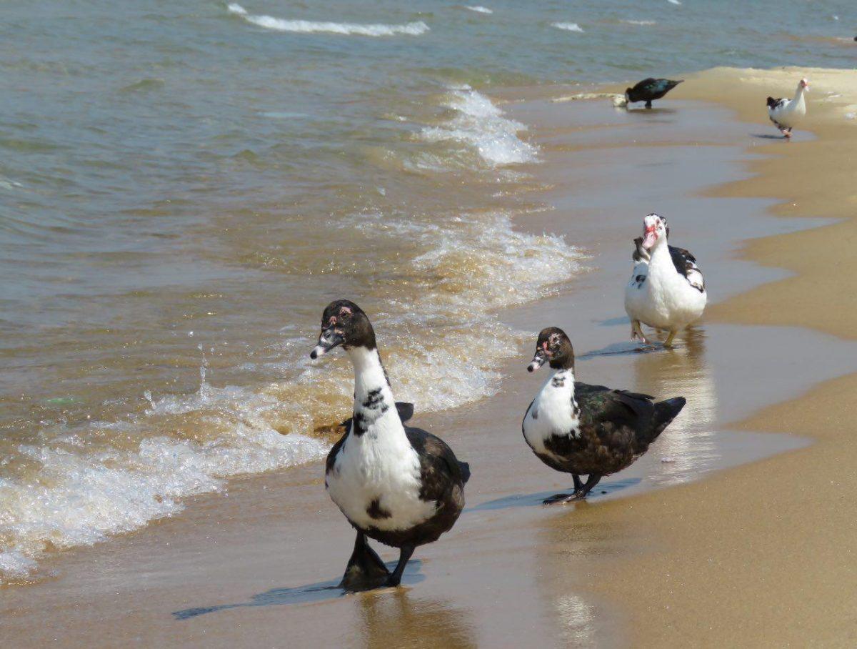 این ها چه سرخوشند برای خودشان، خانواده و خانم بچه ها را انداخته دنبال خودش به قدم زدن کنار ساحل!
