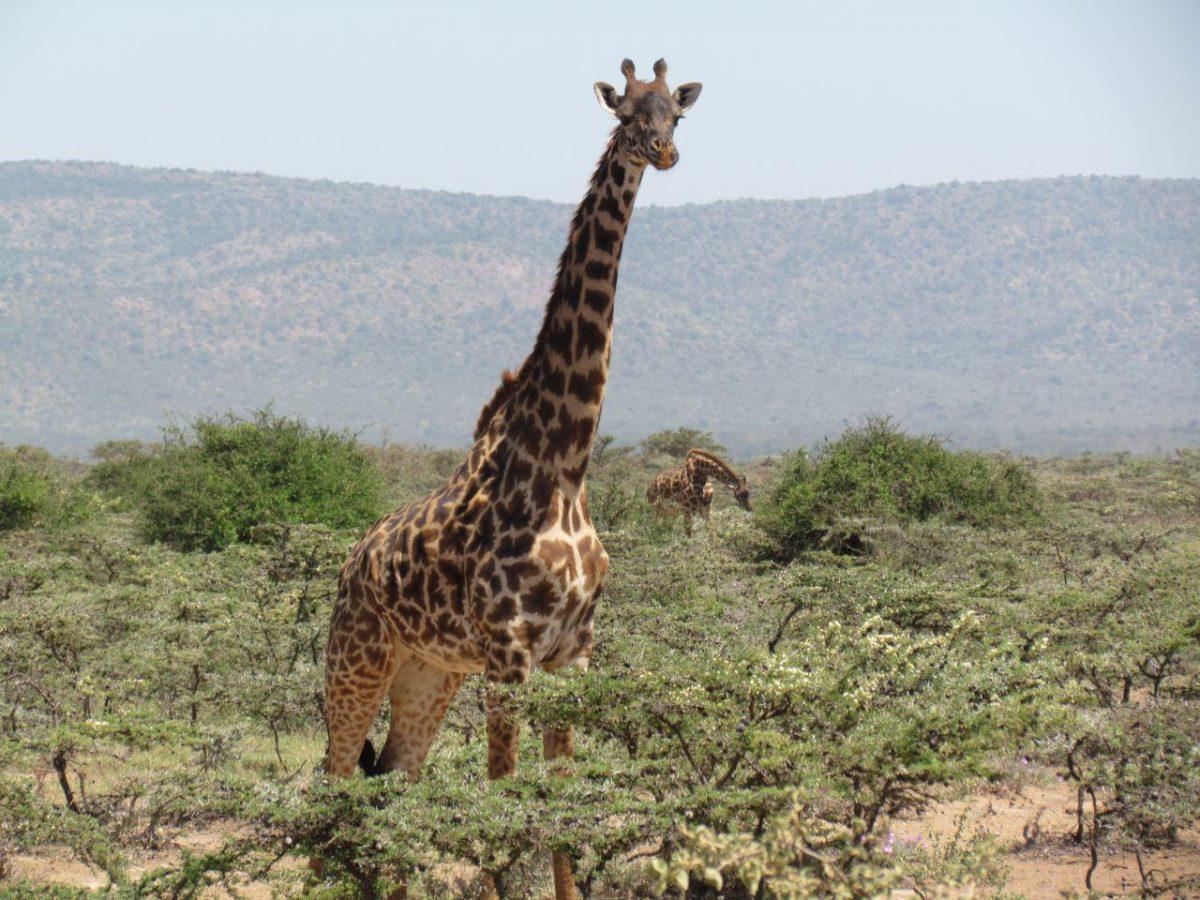 کنیا۶۳