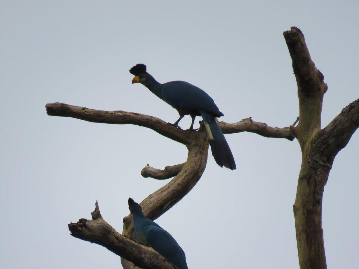 صبحگاهان باران آرام می گیرد، دعوت می شوم به میهمانی نغمه پرندگان، این یکی هم از بالای درختی بیدار شدنم را سرک می کشد... مرغ دل ما را که به کس رام نگردد، آرام تویی، دام تویی، دانه تویی، تو...