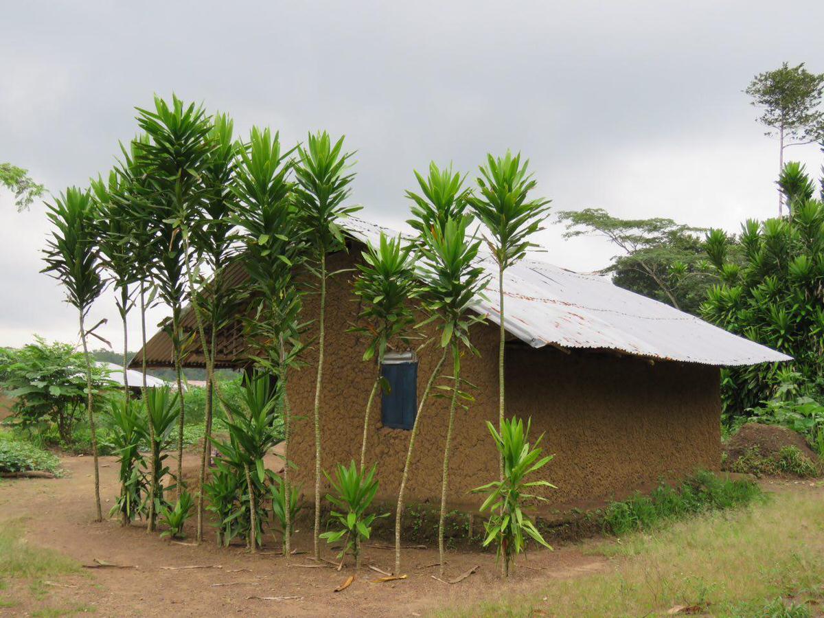 این یکی جلوی خانه اش را در آن روستای جنگلی به درختان تزیین کرده است، فرقی نمی کند داخل روستایی آن وسط های آفریقا زندگی کنی یا در شهری مدرن و امروزی، مهم این است که خوش ذوق باشی و طبیعت دوست...